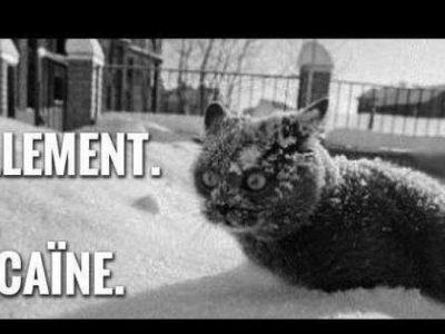 humour, chat, cocaïne